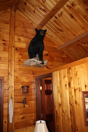 Eagle Lake, ME: Maine Black bear mount in living room