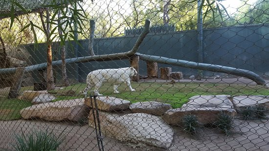 20171128 190523 Picture Of Siegfried Roy 39 S Secret Garden And Dolphin Habitat Las