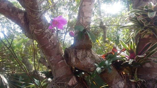 Pousada Vila Pitanga: Las orquideas se destacan en toda la pousada!! Bellisimas!!
