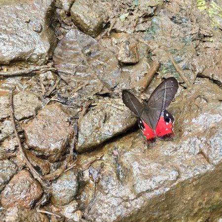 Tenorio Volcano National Park, Kostaryka: photo3.jpg