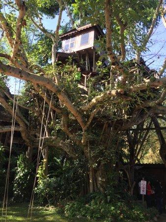 知名園區內樹屋