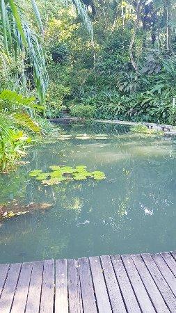 Tropical Spice Garden: 20171221_164806_large.jpg