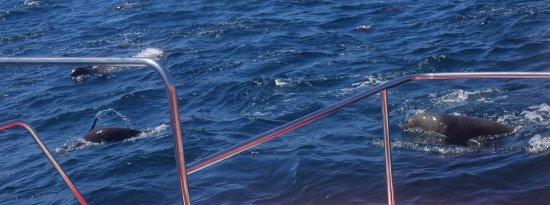 Ocean Blue: Is het een zeehond, een dolfijn of een walvis?
