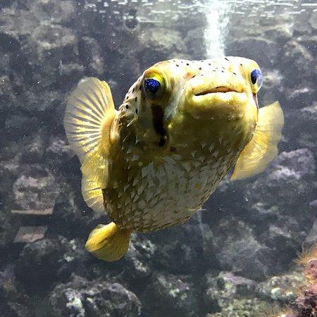 Bermuda Aquarium, Natural History Museum & Zoo: photo7.jpg