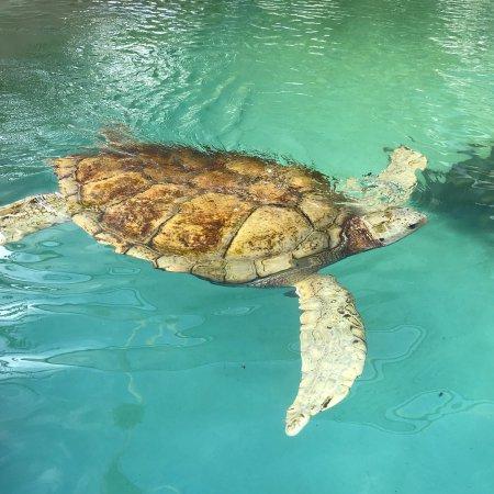 Bermuda Aquarium, Natural History Museum & Zoo: photo8.jpg