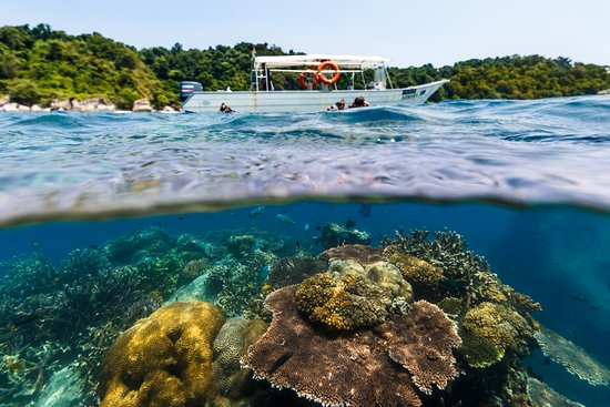 Tioman Dive Centre: Just below the surface, there's another world!