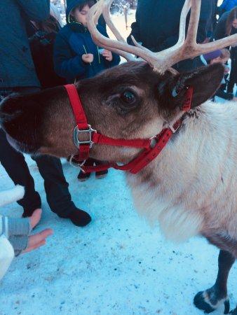 Leavenworth Reindeer Farm Photo