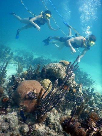 SNUBA Turks and Caicos: Snuba is awesome!!