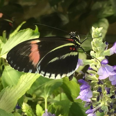 Smithsonian Butterfly Habitat Garden: Photo7