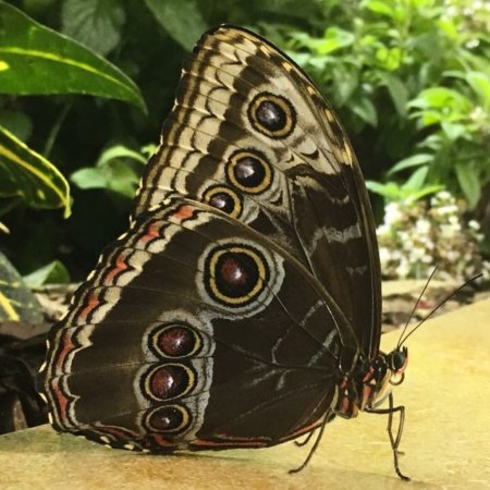 Smithsonian Butterfly Habitat Garden: Photo9