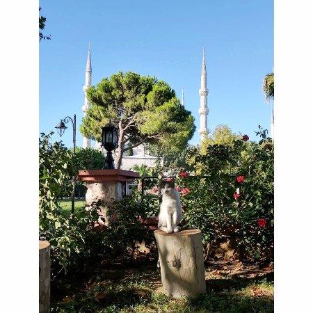 Kedi Picture Of Dervis Cafe Restaurant Istanbul Tripadvisor