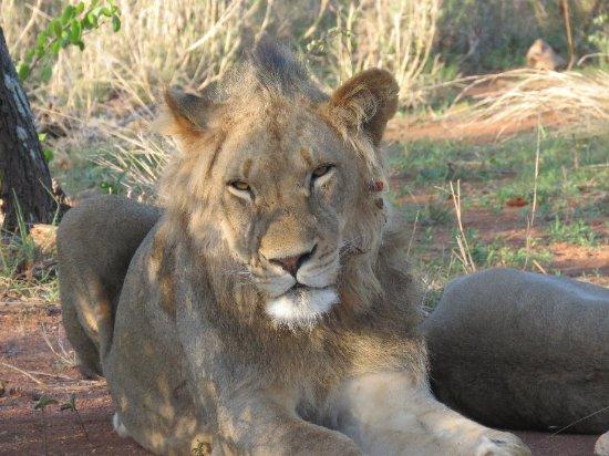 Timbavati Private Nature Reserve, Sudáfrica: Simbavati River Lodge