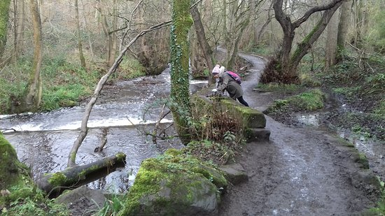 Rivelin Valley Nature Trail: A sluice and weir