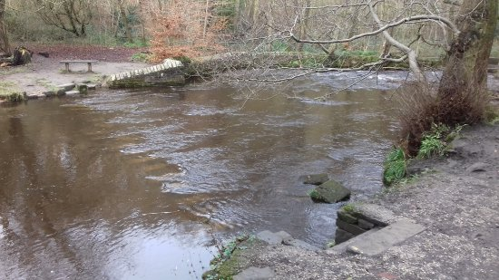 Rivelin Valley Nature Trail: The stepping stones