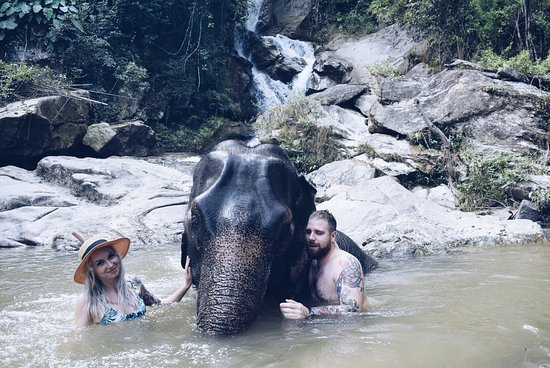 Elephants At Home: swimming in the waterfall