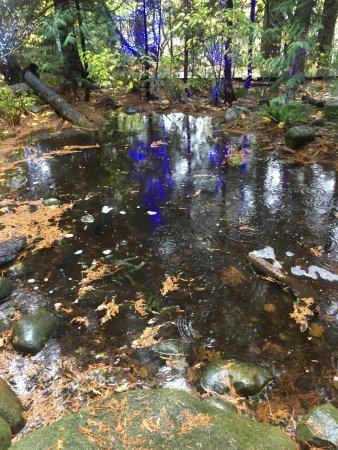 Vancouver Utara, Kanada: Mescla de cores na natureza do Parque Capilano.