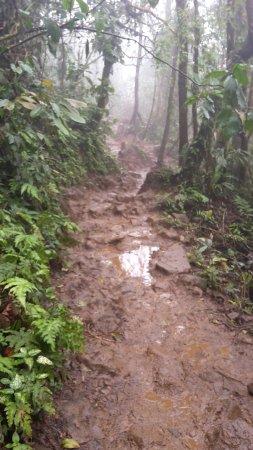 Obraz Tenorio Volcano National Park