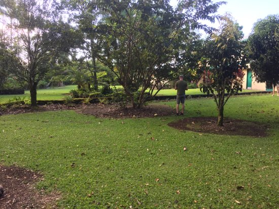 Hale Moana Bed & Breakfast: Lots of fruit trees and flowers