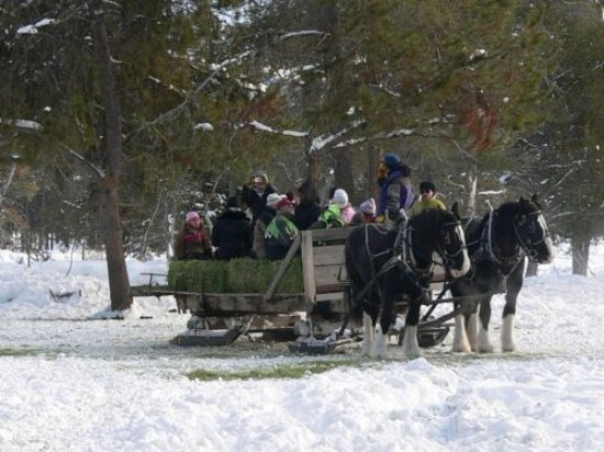 Ashley Inn: Elk Feeding Sleigh Ride
