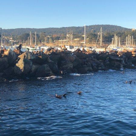 monterey bay whale watch monterey ca verenigde staten