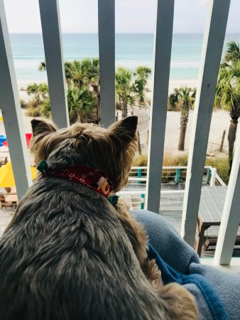 The Sandpiper Beacon Beach Resort Photo