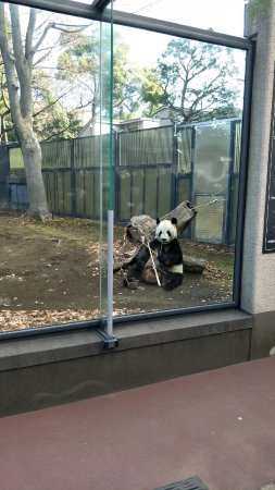 Ueno Zoo Taito All You Need To Know Before You Go With Photos - 10 awesome zoos where you can spend the night