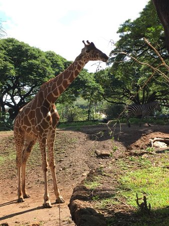 Honolulu Zoo All You Need To Know Before You Go With Photos - 10 awesome zoos where you can spend the night