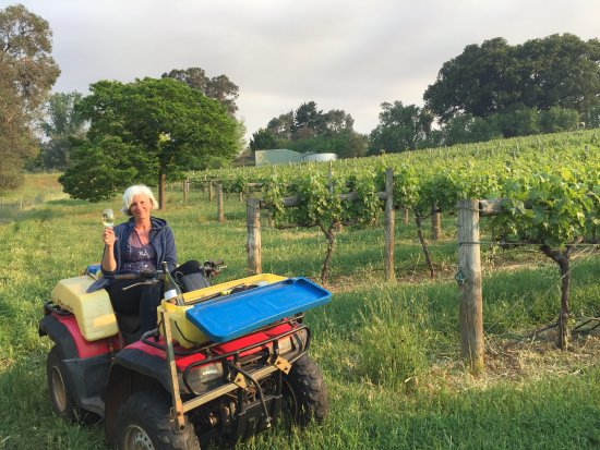 Bridgetown, ออสเตรเลีย: A relaxing afternoon in the vineyard.