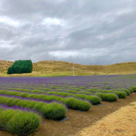 Mackenzie District, New Zealand: photo0.jpg