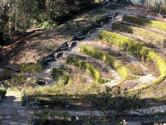 Berkeley Municipal Rose Garden: IMG_20171227_132852_large.jpg