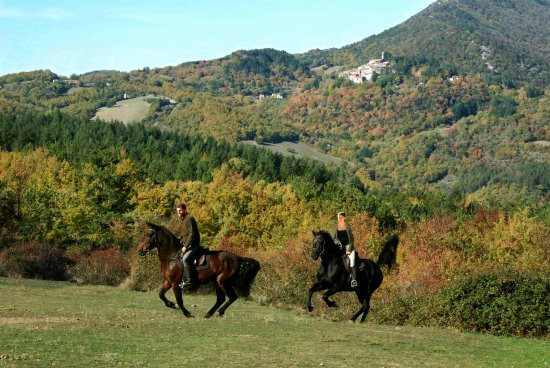 Montieri, Italie : Gallop during the horseback riding holidays in Tuscany