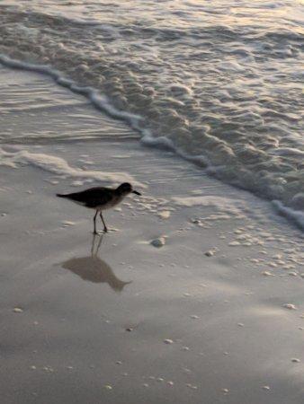 Captiva Beach Resort-bild