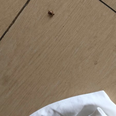 Clarion Victoria Hotel and Suites Panama: I found a roach in my room🤮🤮