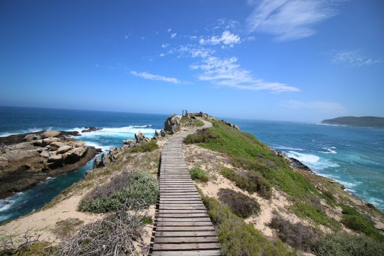 Image result for robberg nature reserve
