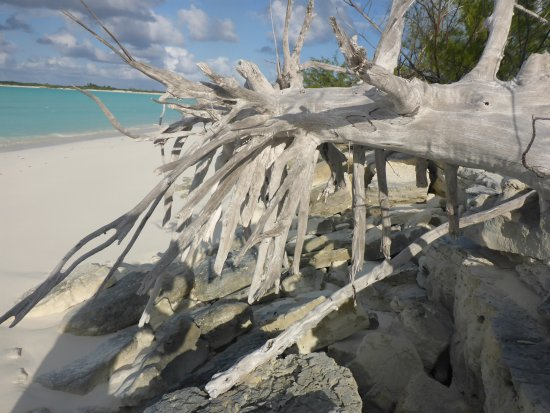 Little Exuma: drift wood