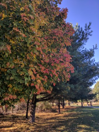 Millersville, MD: Along the perimeter trail