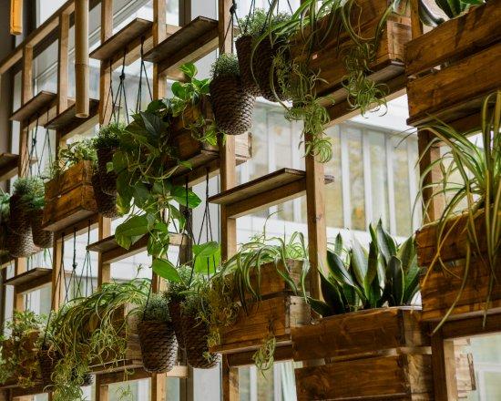 Pflanzen picture of eden vietnam restaurant berlin for Berlin pflanzen