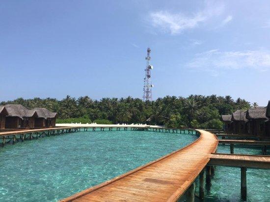 Fihalhohi Island Resort: IMG-20171121-WA0045_large.jpg