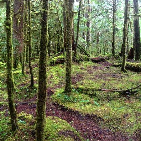 Salem, OR: Lush green moss everywhere