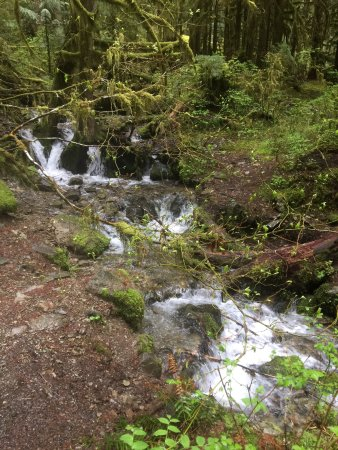 Salem, OR: Small Falls along the creek