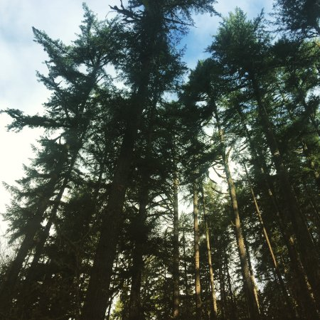 Sublimity, OR: The forest here is spectacular