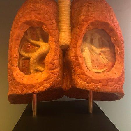 CORPUS 'journey through the human body' Photo