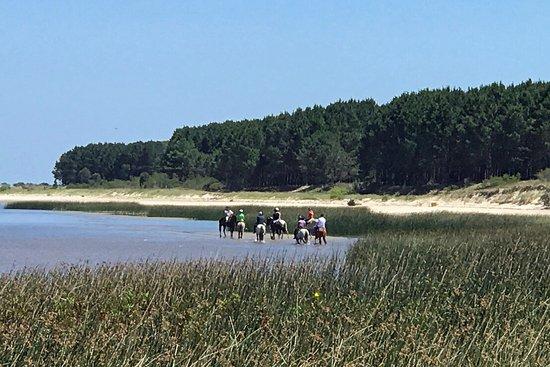 Colonia Horseriding: Riding on La Plata beaches