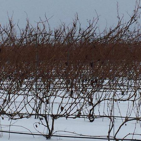 Brys Estate Vineyard & Winery: photo1.jpg