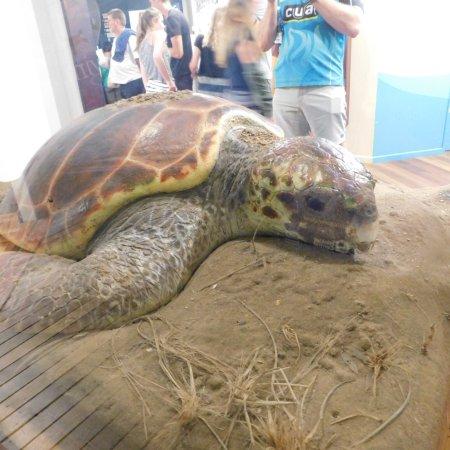 Turtle Encounters: photo3.jpg