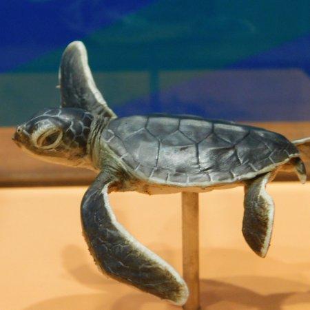 Turtle Encounters: photo5.jpg