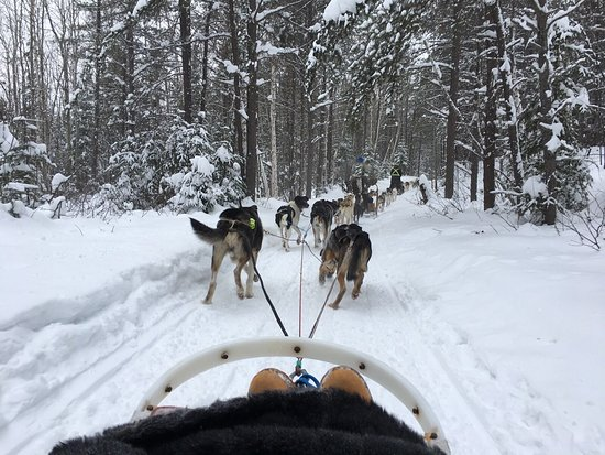 Alaskan du nord