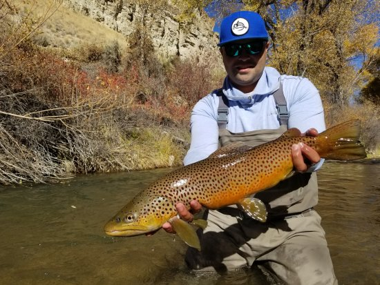 Orem, UT: Big Brown Trout