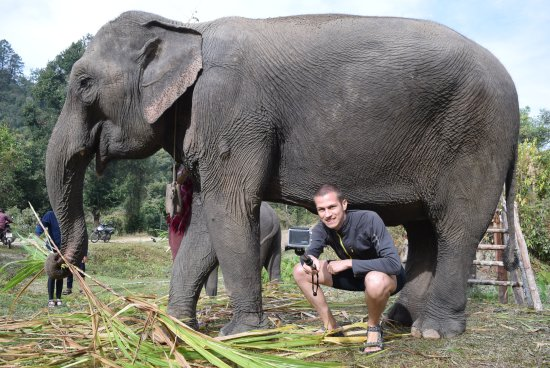Elephants At Home: welcome