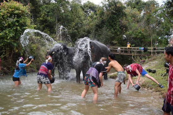 Elephants At Home: splash